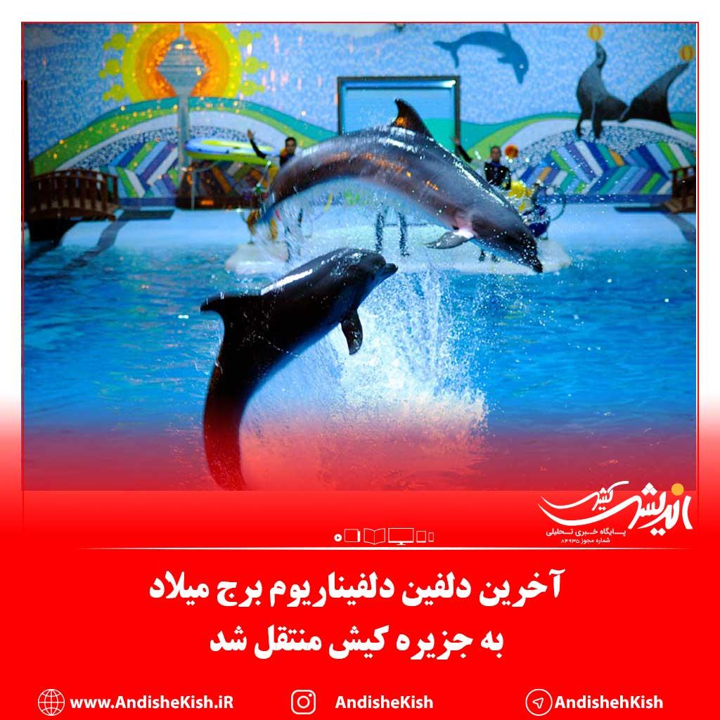آخرین دلفین دلفیناریوم برج میلاد به جزیره کیش منتقل شد